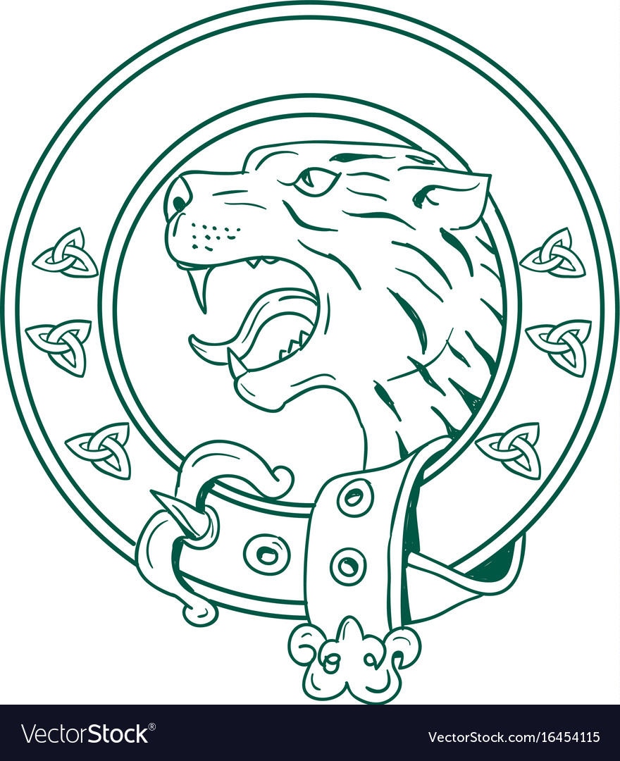 Scottish wildcat head celtic belt drawing vector image