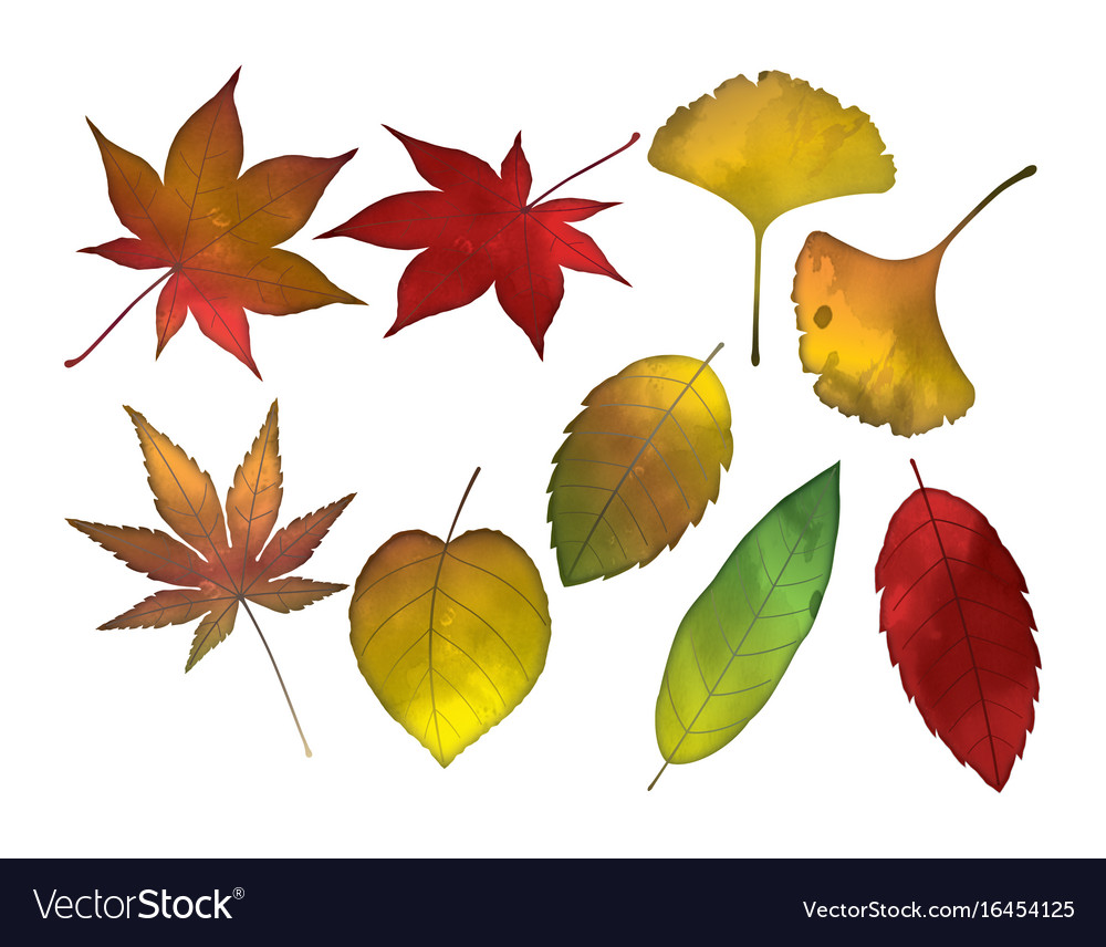 An autumn leaves set