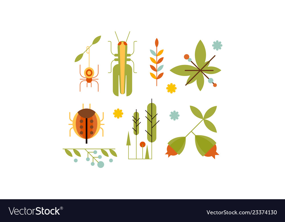 Collection insects and plants nature and