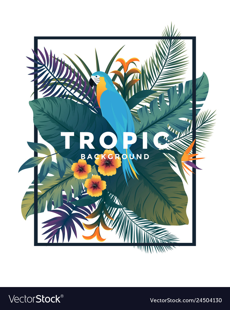 Tropical bakground with frame 2
