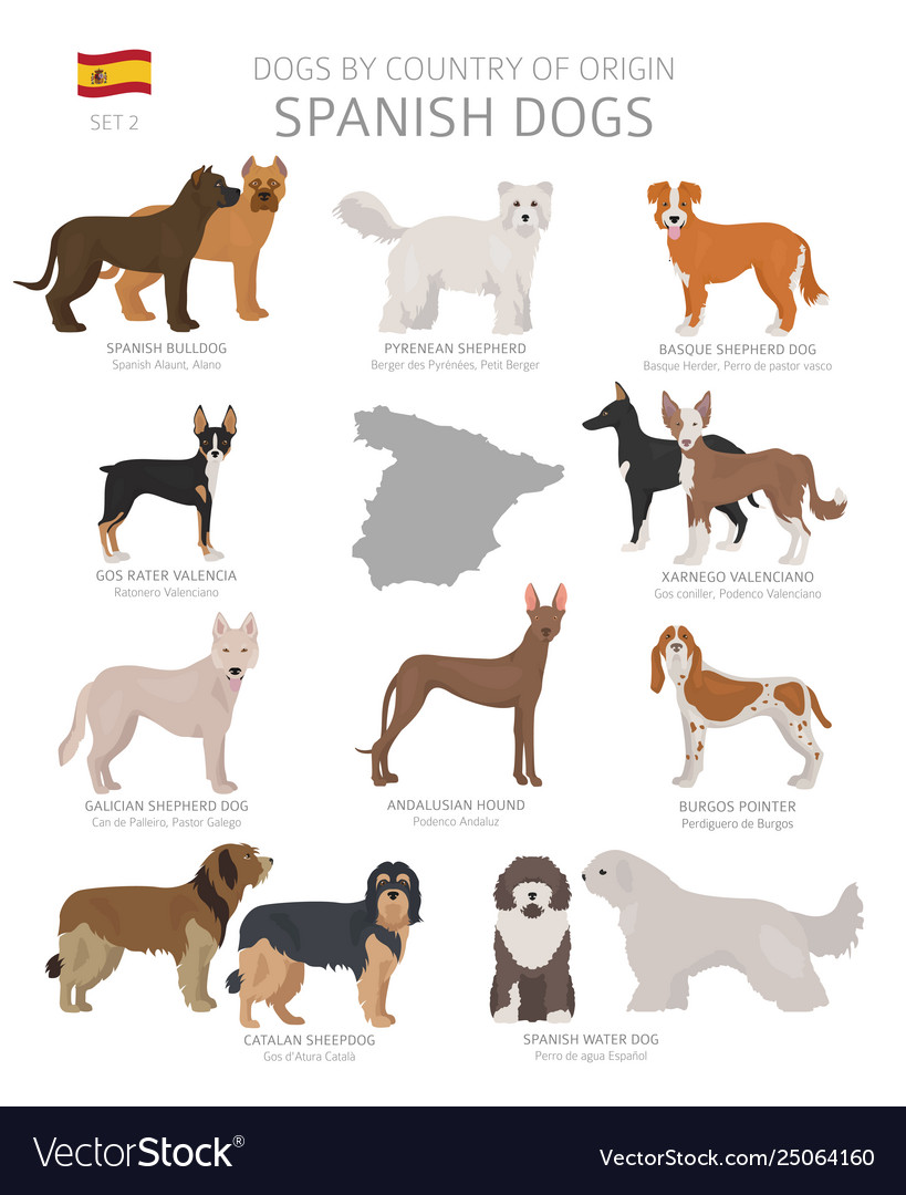 Dogs country origin spanish dog breeds