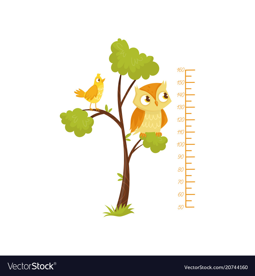 Kids height chart and birds sitting on branches of