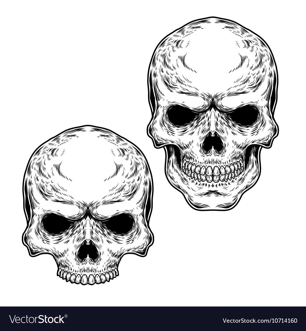 Set of two skulls vector image