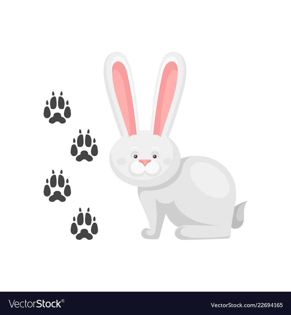 Cute little bunny and his footprints tracks