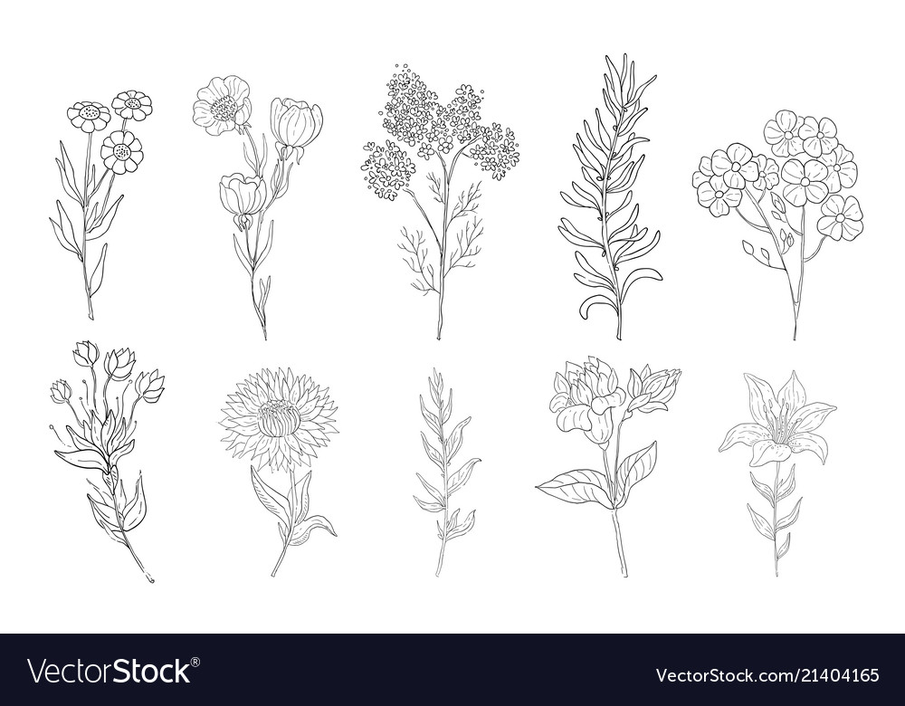 Hand drawn medical herbs line drawing plants
