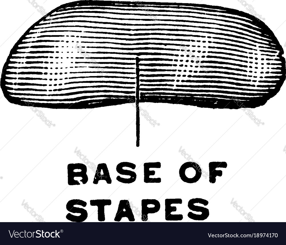Medial View Of The Stapes Vintage Royalty Free Vector Image