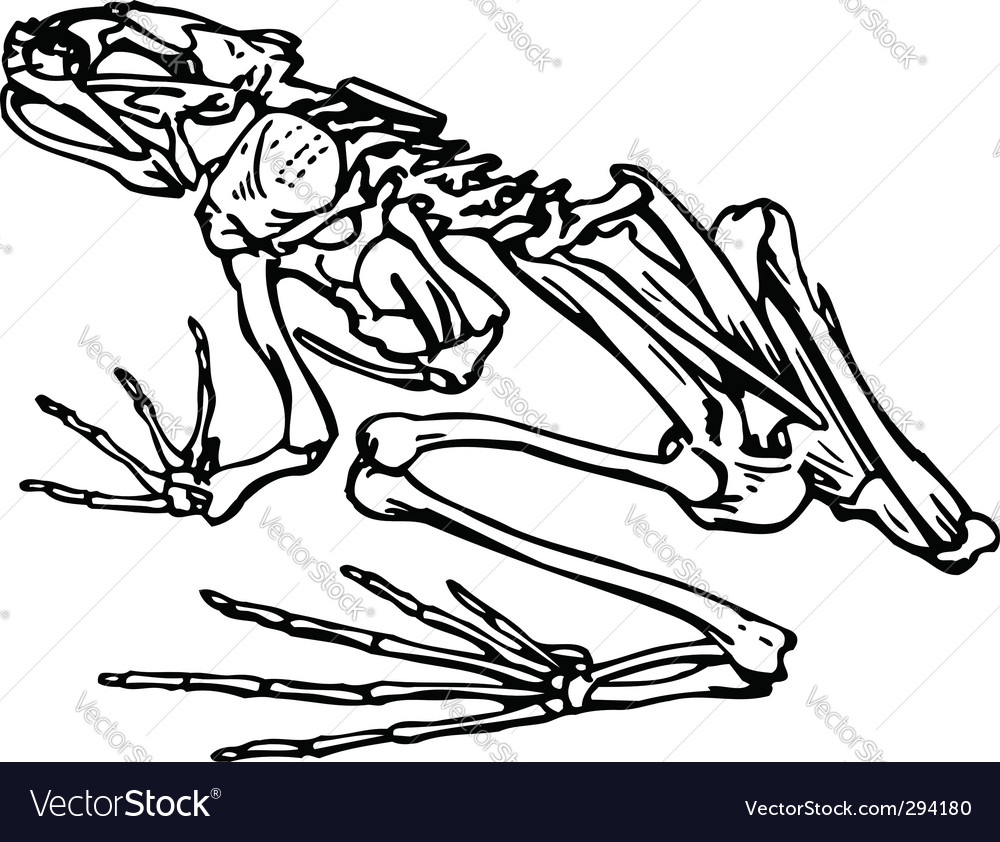 skeleton of a frog royalty free vector image vectorstock rh vectorstock com Cute Frog Silhouette Tree Frog Vector