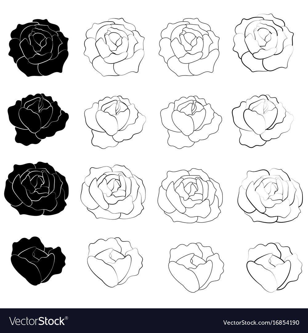 Black rose flower design
