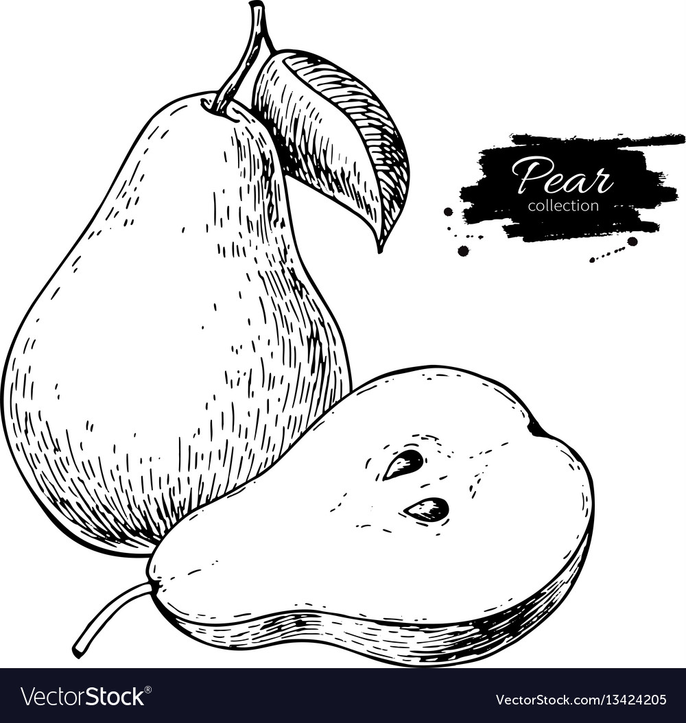 Pear drawing isolated hand drawn pear and