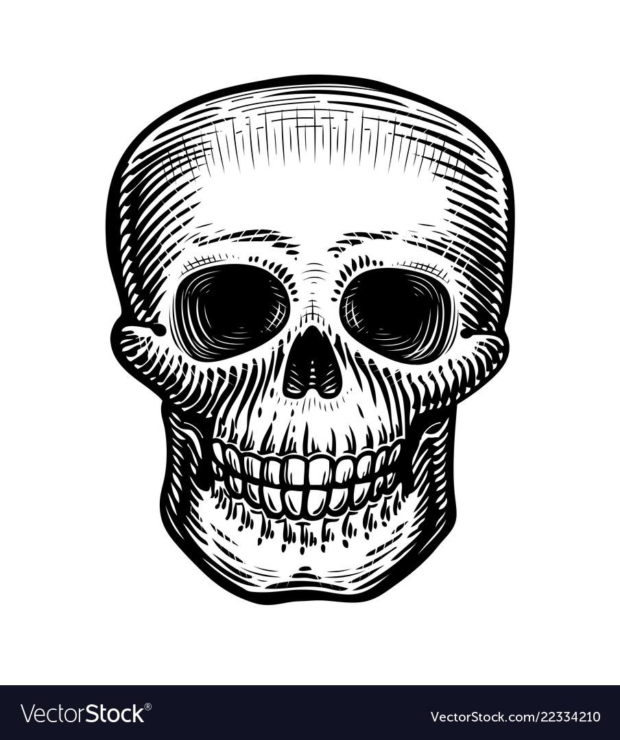 Human skull sketch hand-drawn skeleton zombie