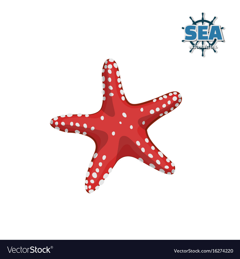 Red starfish on white background isolated drawing