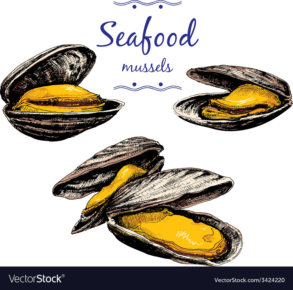 Seafood Mussels vector image