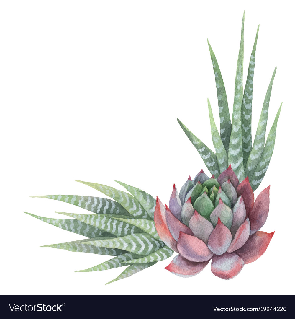 Watercolor bouquet of cacti and succulent