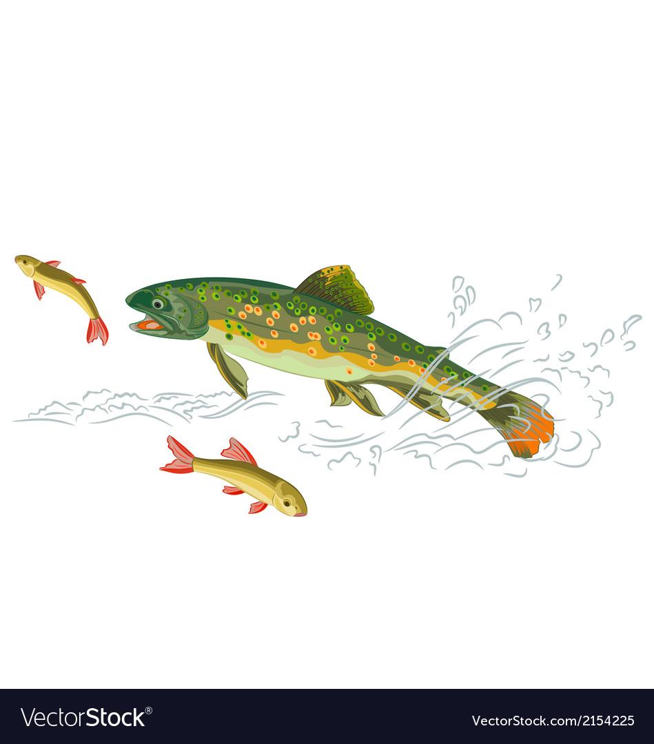 Brook-trout-predator-catch vector image