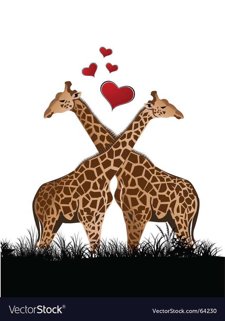 Giraffe love vector image