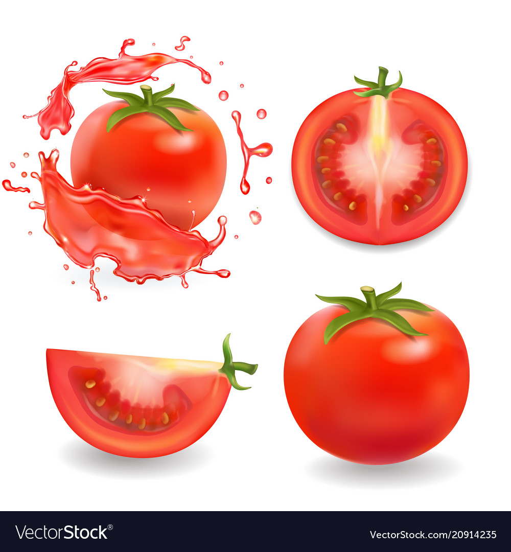 Tomatoes isolated realistic