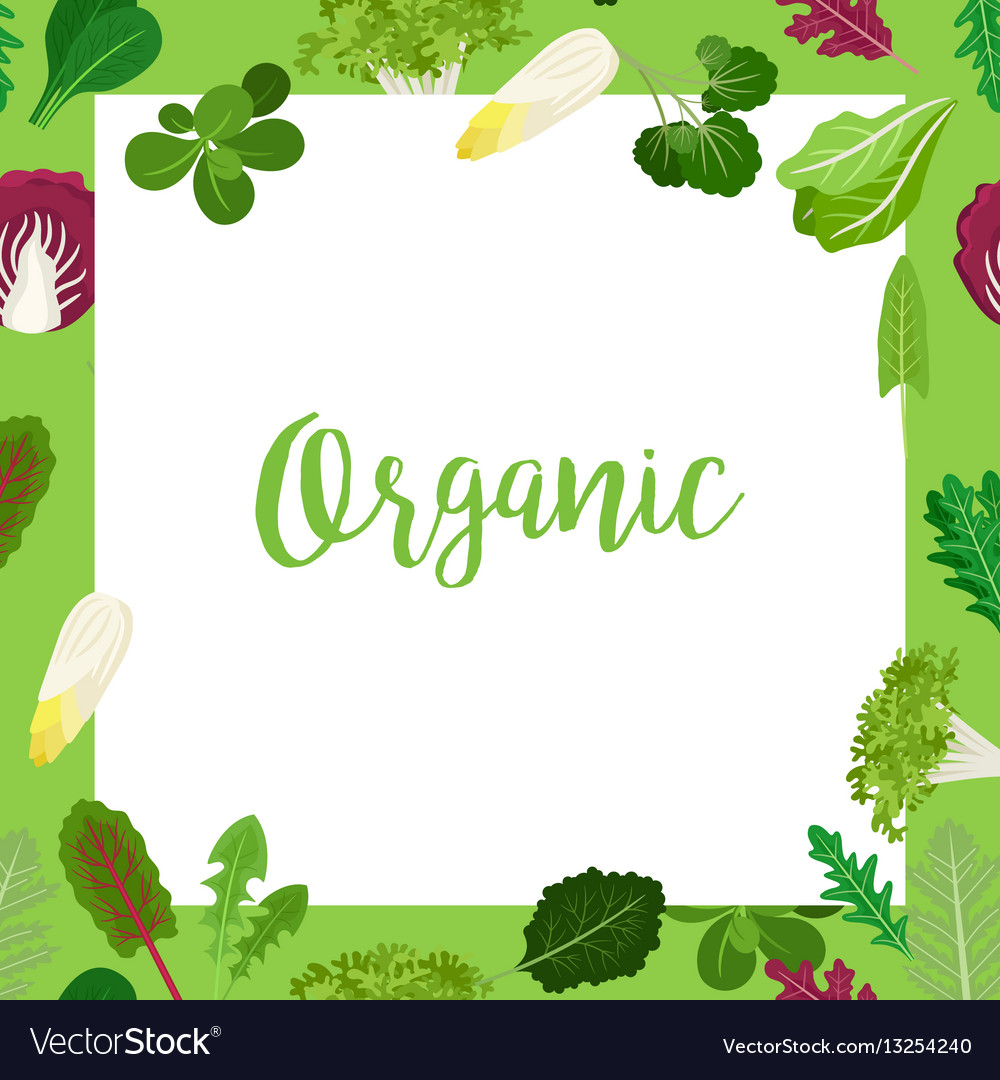 Organic banner with leaves square frame Royalty Free Vector