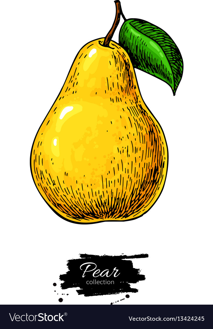 Pear drawing isolated hand drawn object on