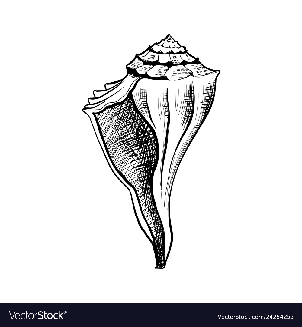 Seashell conch hand drawn