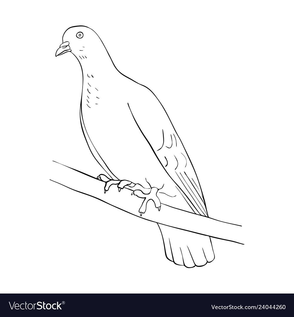Bird at tree branch
