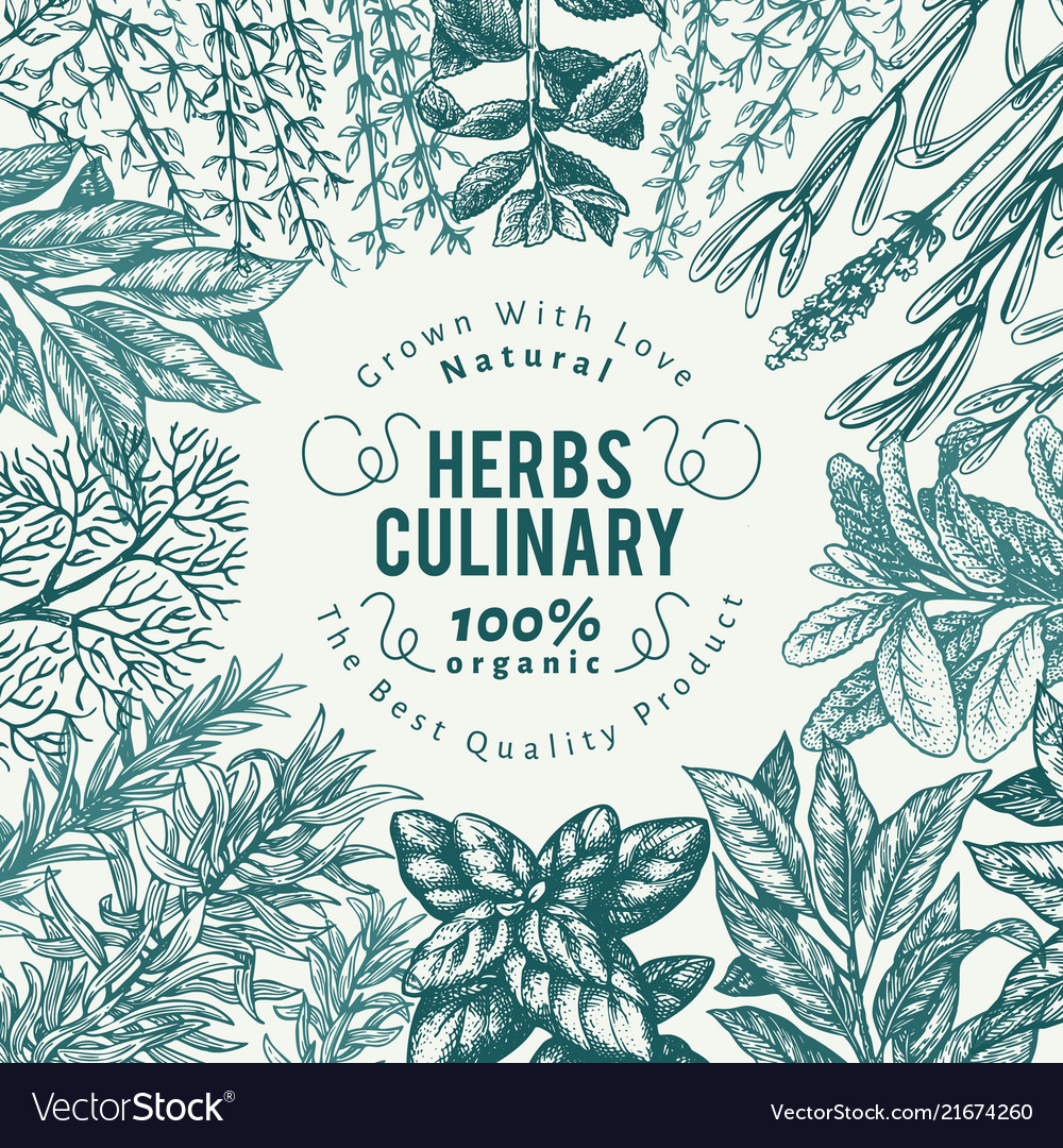 Herbs, And, Spices, Banner, Hand & Drawn Vector Images (45)