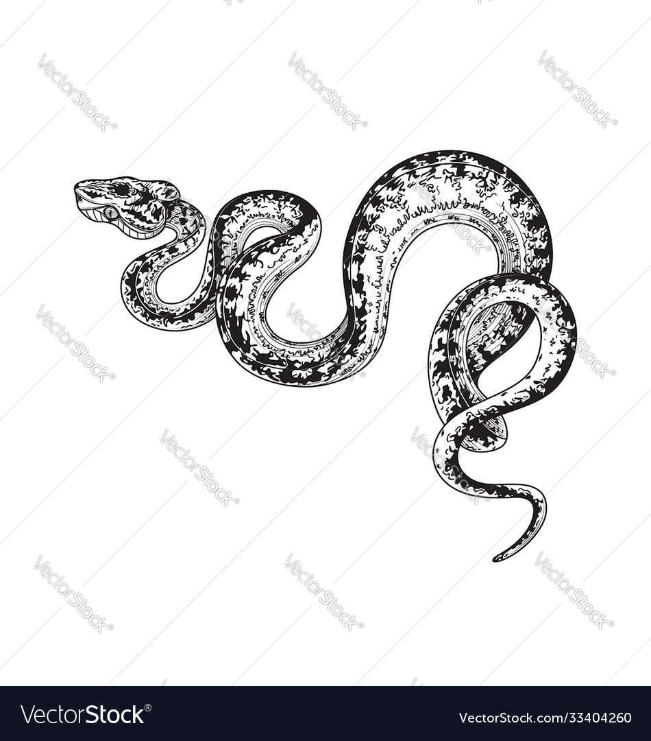 Hand drawn monochrome spotted snake