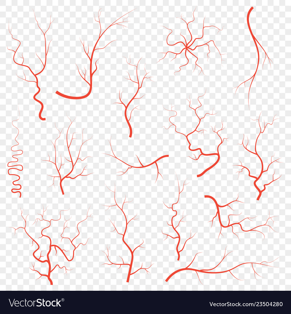 Human Red Eye Veins Set Anatomy Blood Vessel Vector Image Blood vessel texture illustrations & vectors. vectorstock