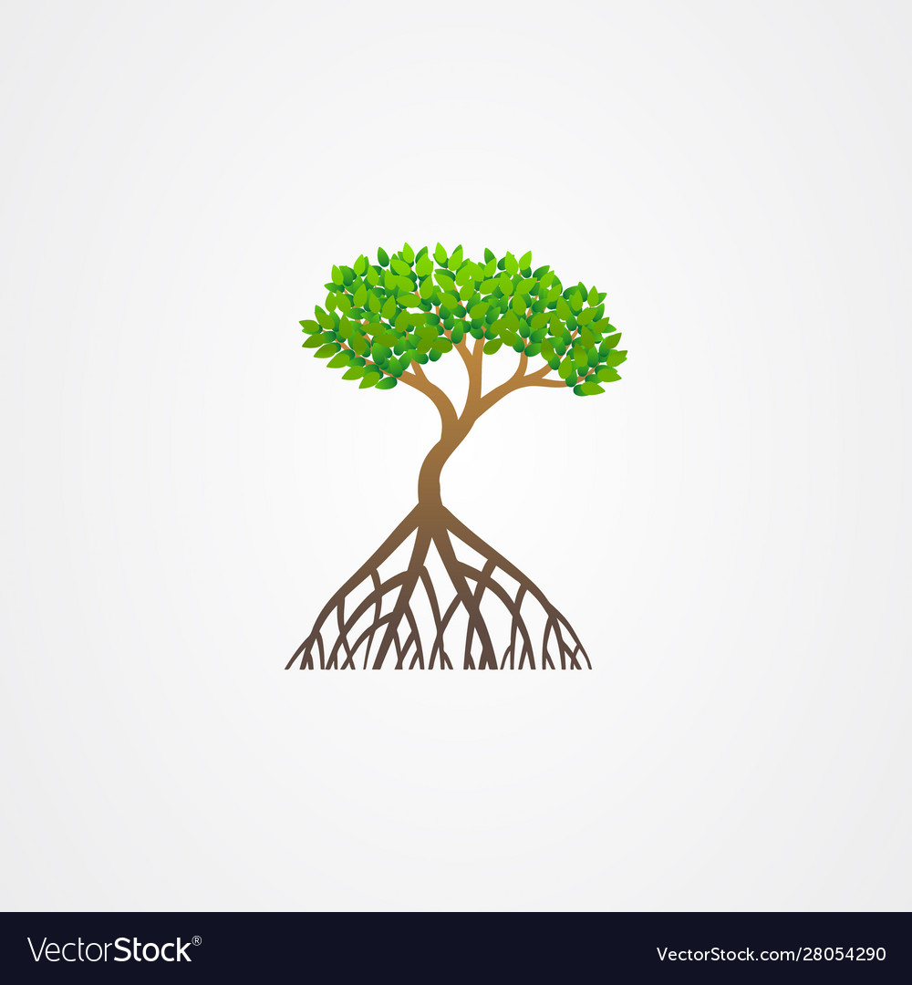 mangrove tree with roots and green leaves vector image vectorstock
