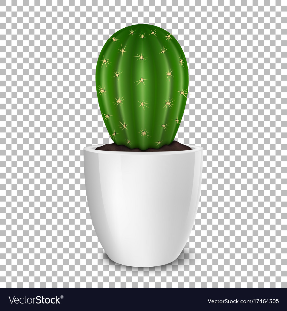 Realistic decorative cactus plant in white flower vector image mightylinksfo