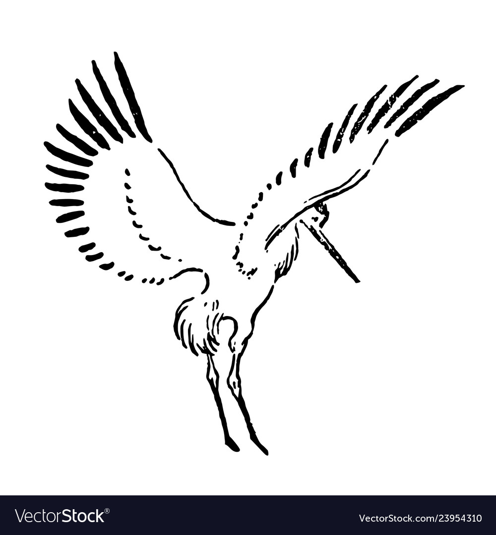 Hand drawn sketch of stork on
