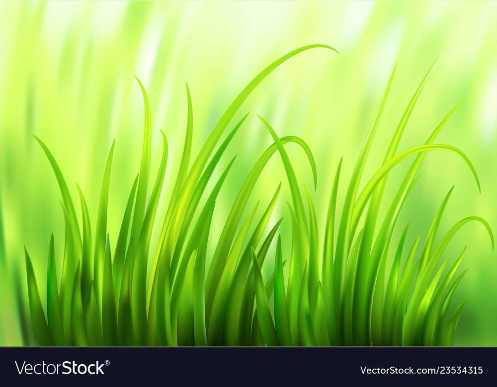 Frash spring green grass background