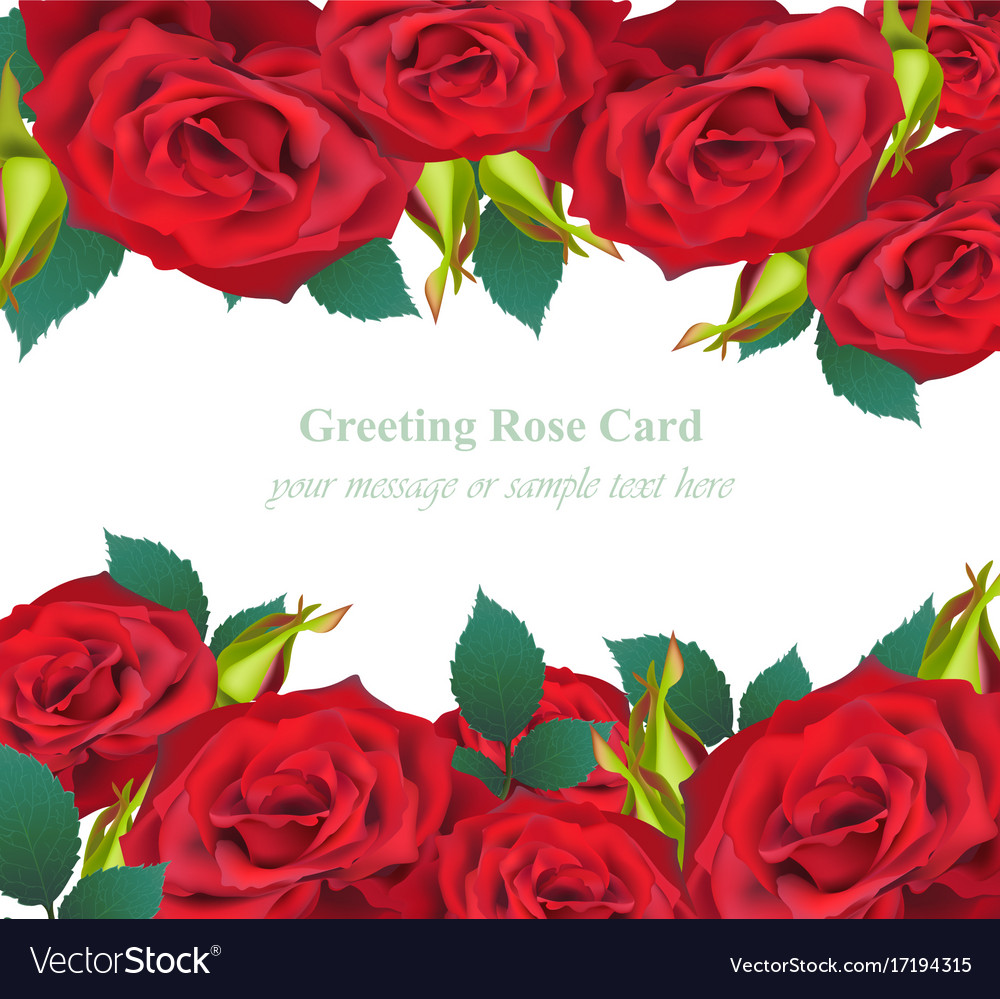 Red roses flower invitation card delicate vector image stopboris Images