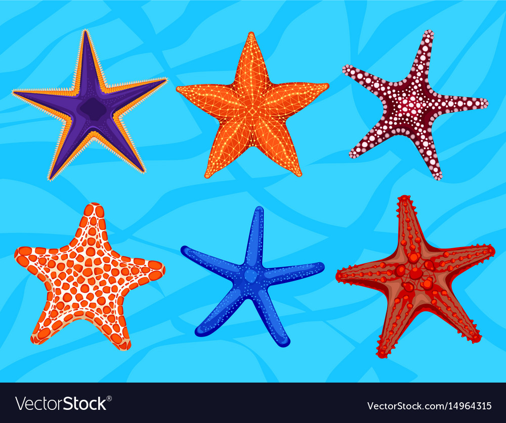 Set of colourful realistic starfishes underwater