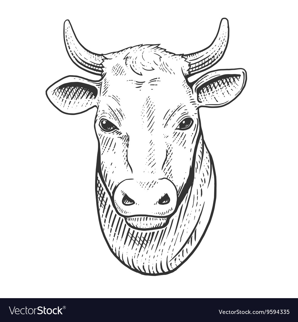 Cow head engraving style