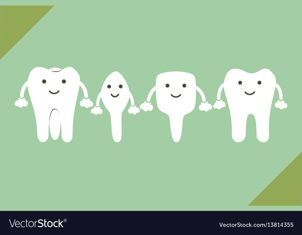 Tooth type - incisor canine premolar molar