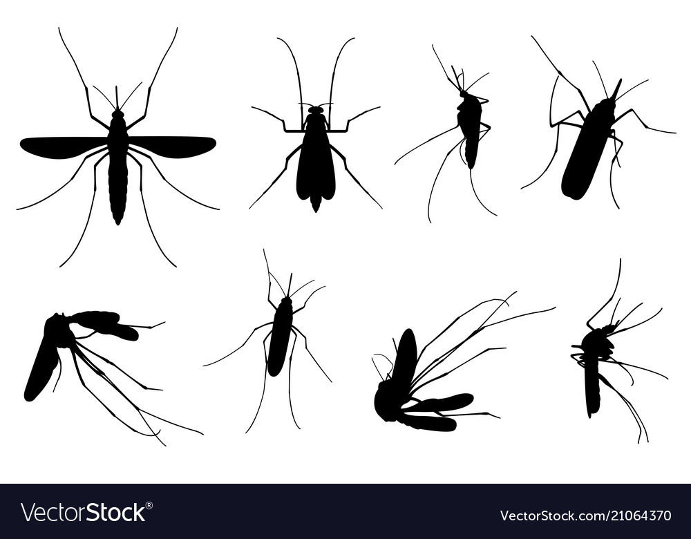 Set Of Different Mosquitoes Royalty Free Vector Image