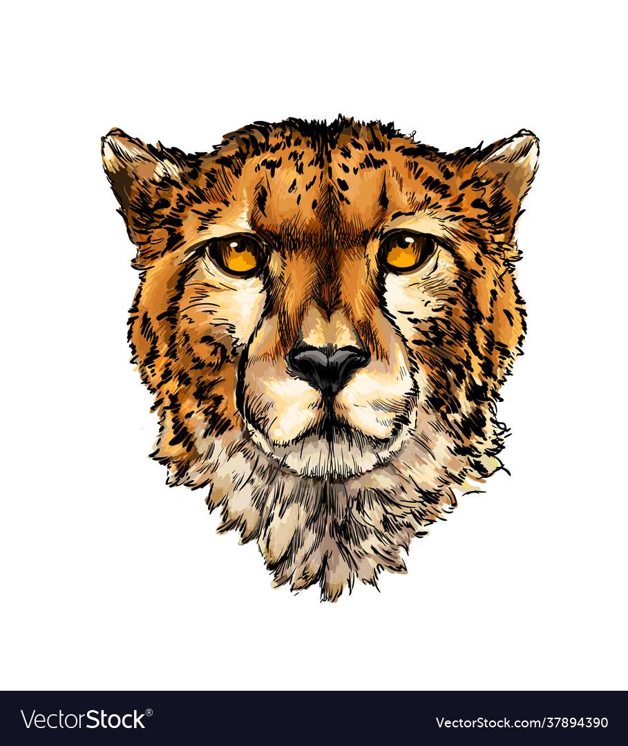 Cheetah head portrait from a splash watercolor
