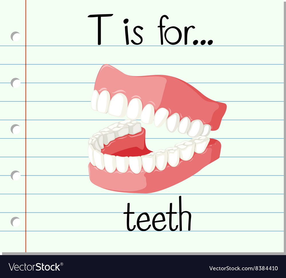 flashcard letter t is for teeth royalty free vector image