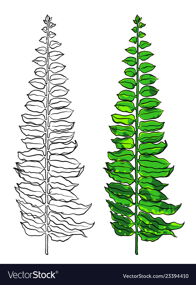 Tropical leaf botanical hand drawn
