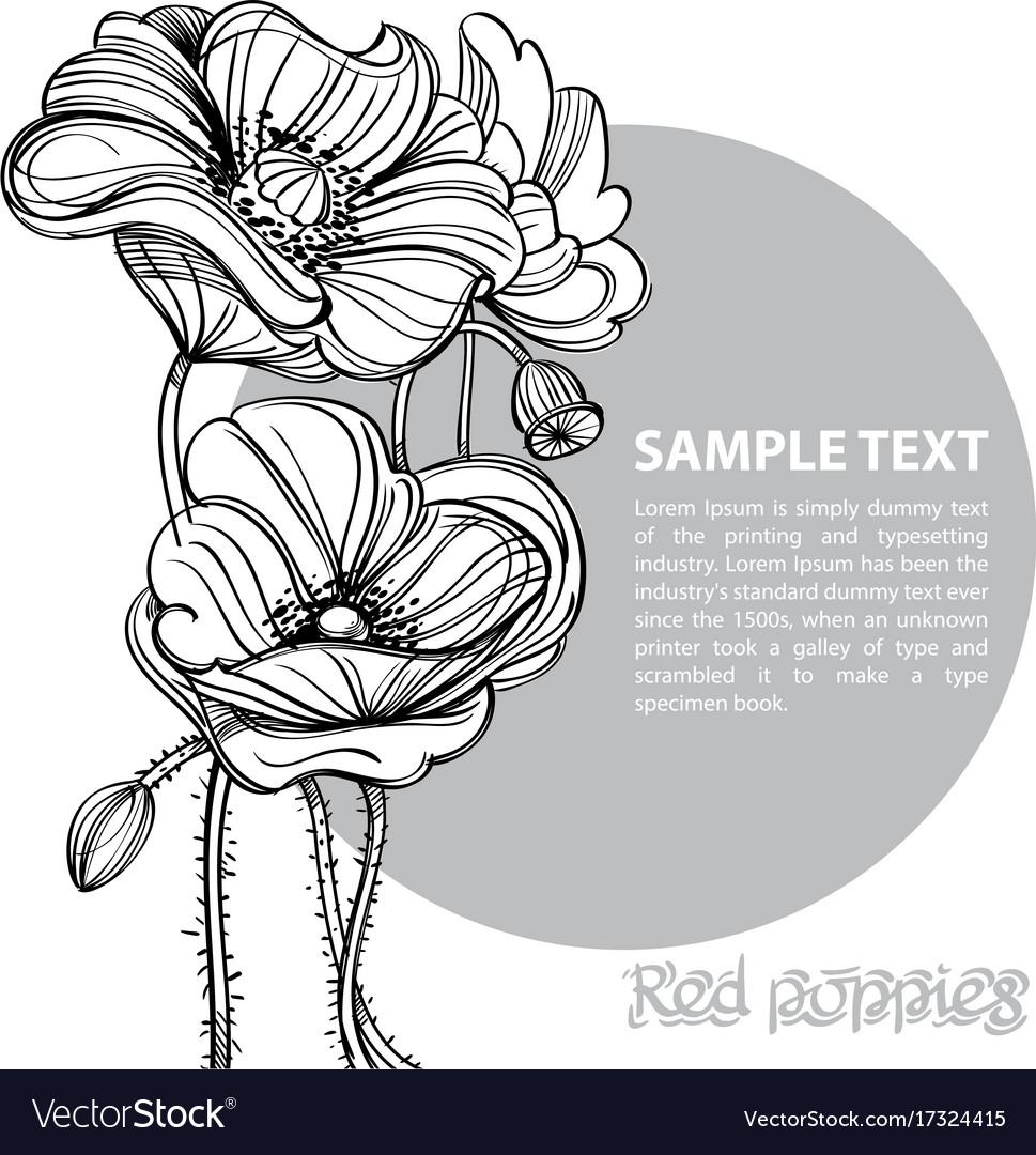 Contour Image Of Poppy Flowers Floral Design Vector Image
