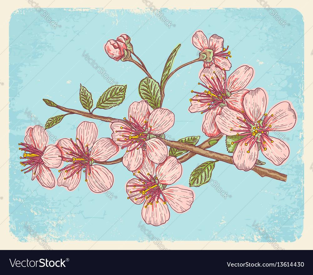 Postcard with sakura vector image