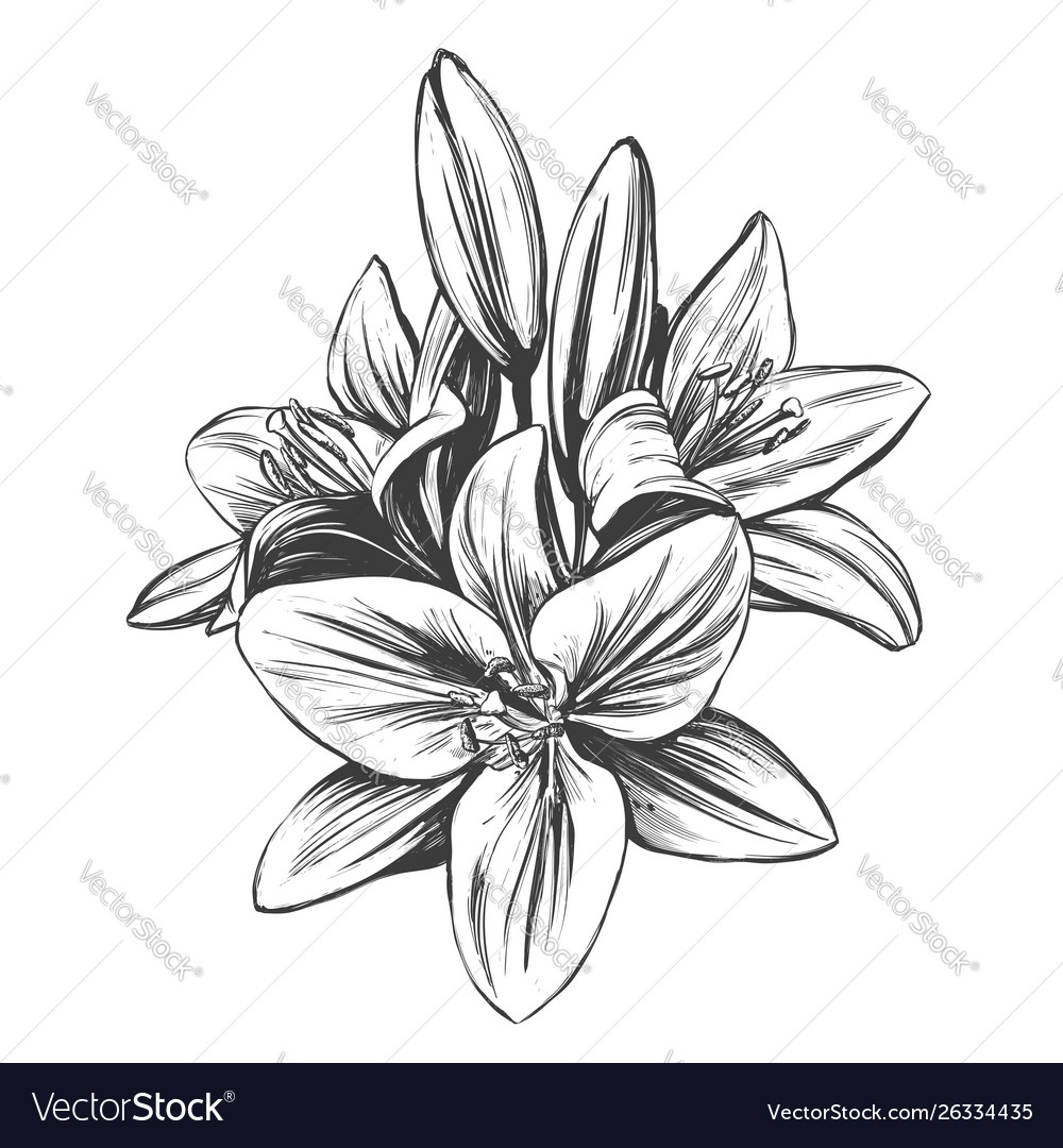 Floral blooming lilies hand
