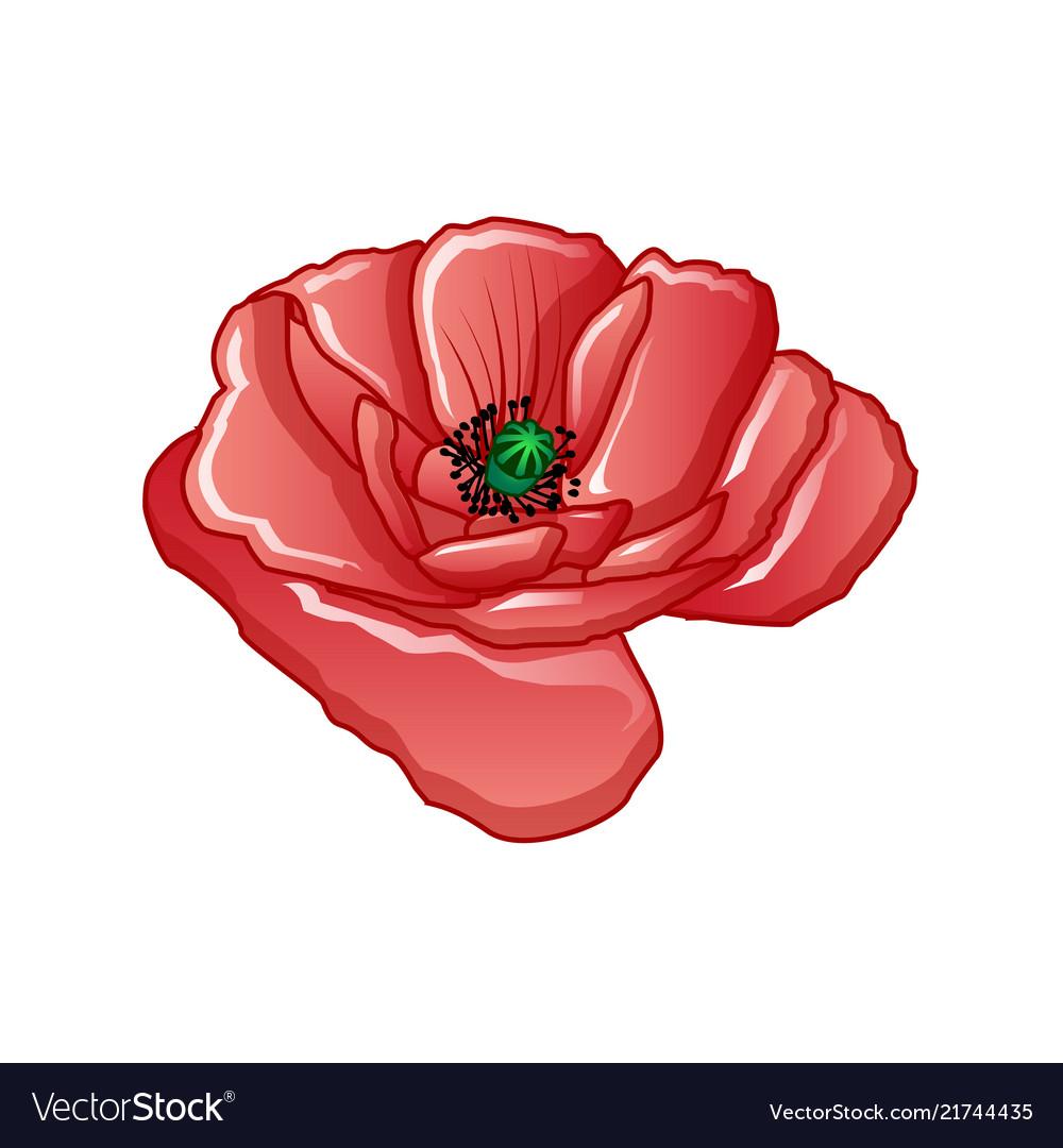 Poppy flower icon cartoon style