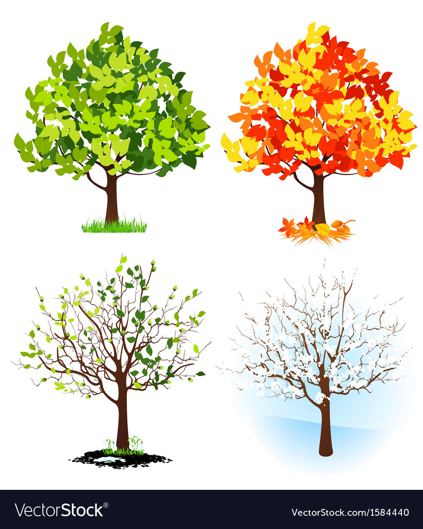 Image result for season trees