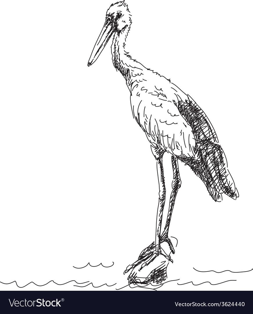Heron bird vector image
