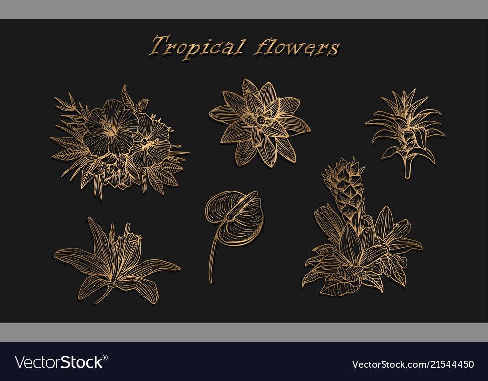 Tropical flowers in a set of isolated