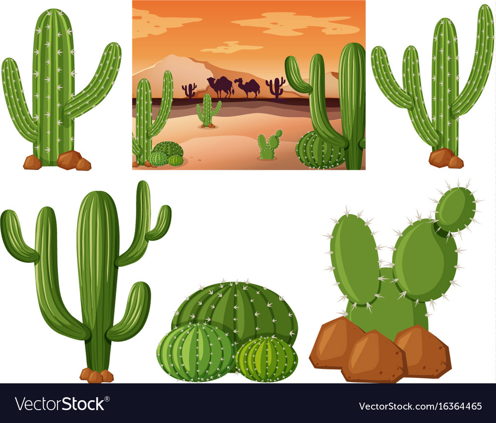 Desert Field With Cactus Plants Royalty Free Vector Image