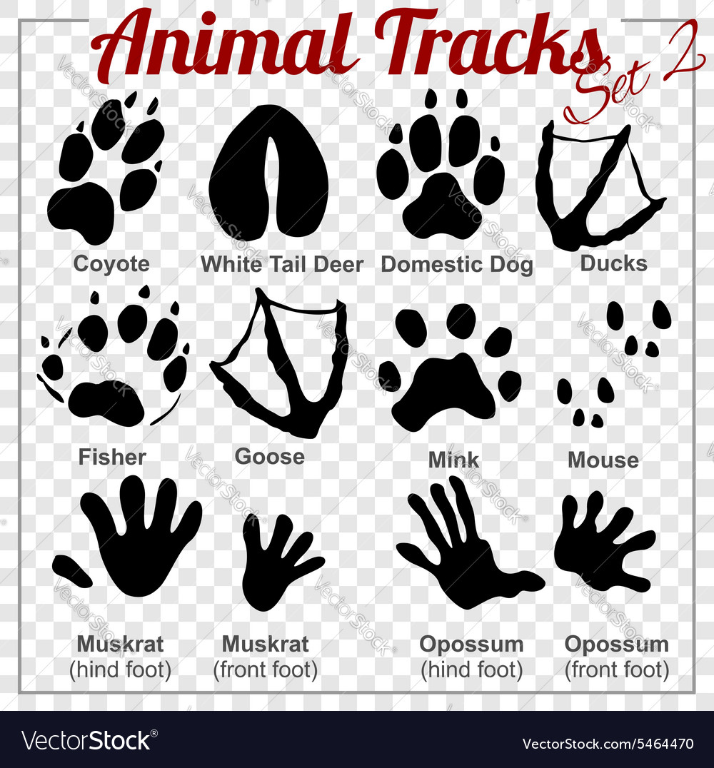 Animals Tracks - set