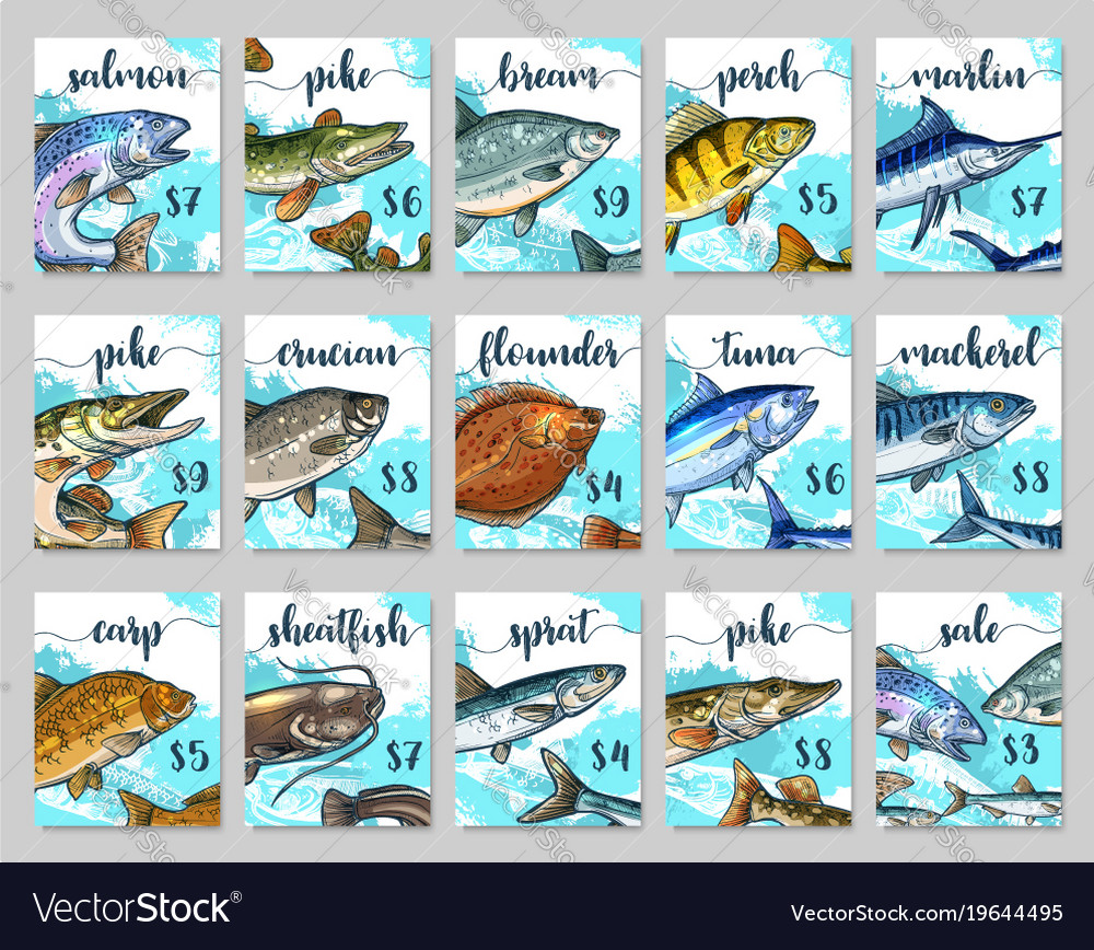 Price cards sketch set for fish shop market vector image