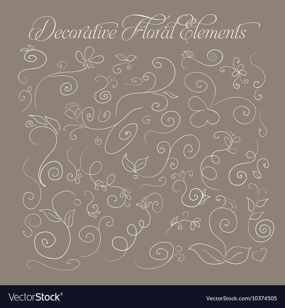 Set of decorative floral elements hand-drawn on a